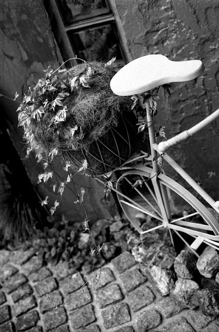 2009-9-13 蔦と白い自転車_c0136330_1846143.jpg