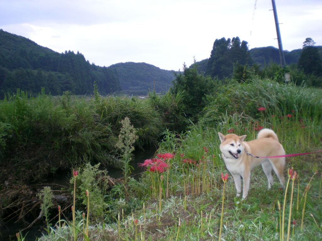 2009年9月12日(土)愛ちゃんと曼珠紗華!_f0060461_1051621.jpg