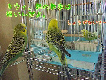 f0196665_052468.jpg