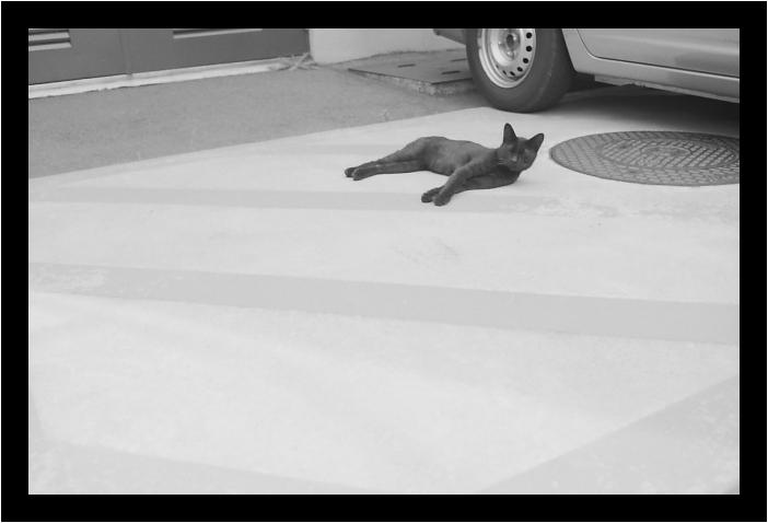 黒猫_c0170584_1952481.jpg