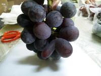 ヘンテコな粒の葡萄たち。_f0018099_12213884.jpg