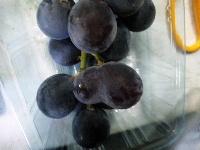 ヘンテコな粒の葡萄たち。_f0018099_12223692.jpg