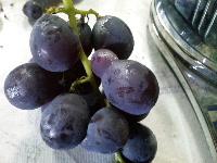 ヘンテコな粒の葡萄たち。_f0018099_12232245.jpg