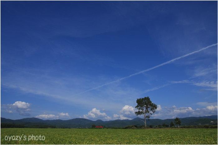 飛行機雲_a0071514_19502052.jpg