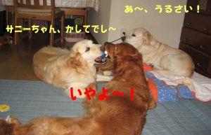 b0008217_21493782.jpg