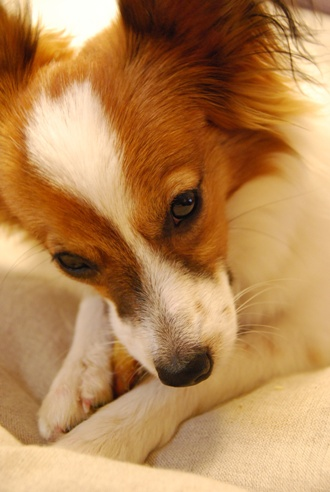 犬のごはんと体質_c0099133_10471216.jpg