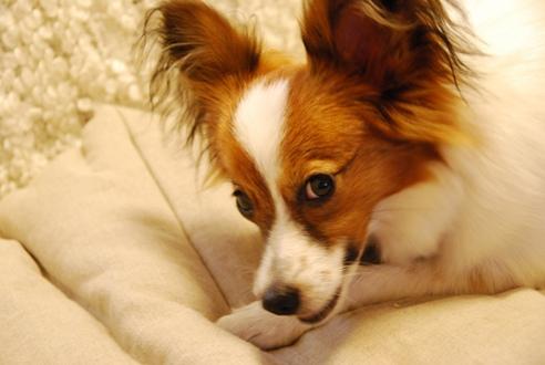 犬のごはんと体質_c0099133_10473594.jpg