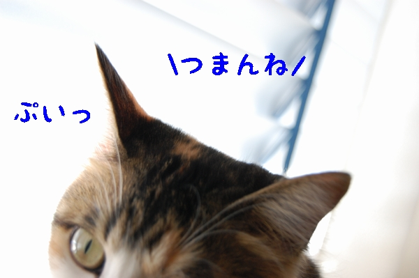 c0181639_11521924.jpg