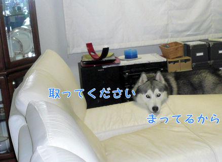 f0112407_11261950.jpg