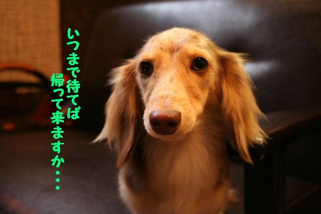 b0130018_15383447.jpg