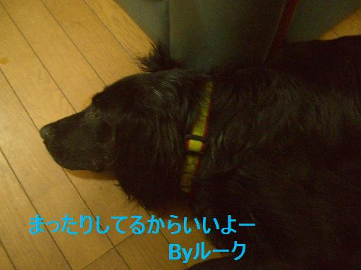 a0068231_2043876.jpg
