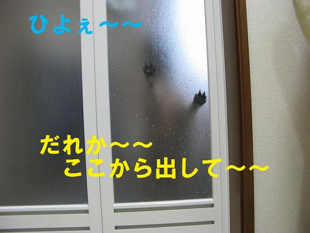 c0202659_19124153.jpg