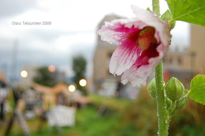 小樽鉄路写真展2009 ~最終日~ 9月13日  _d0140869_22324789.jpg