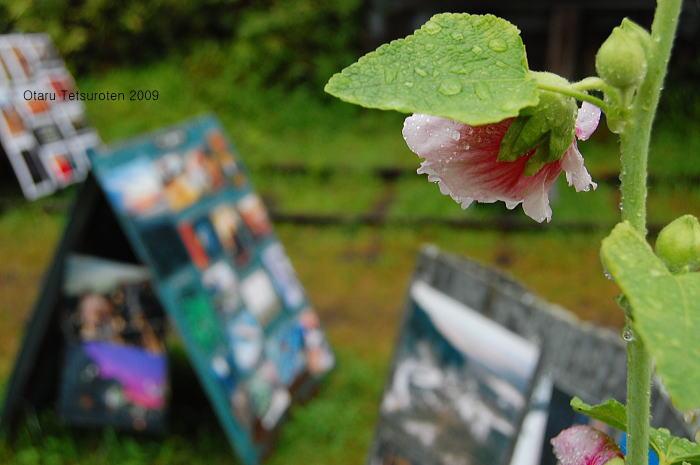 小樽鉄路写真展2009 ~最終日~ 9月13日  _d0140869_22465831.jpg