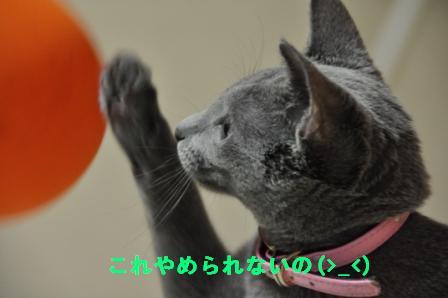 c0203287_3195162.jpg