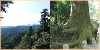 高尾山ウォーキング_c0051105_10321384.jpg