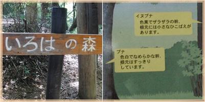 高尾山ウォーキング_c0051105_11282776.jpg