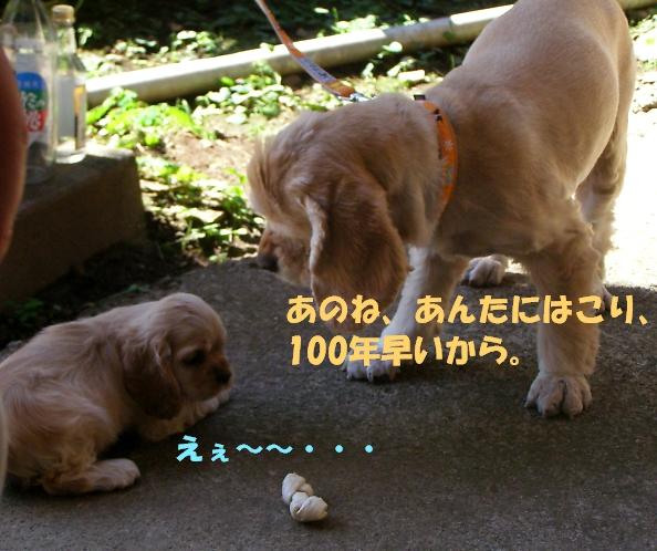 b0067012_9244578.jpg