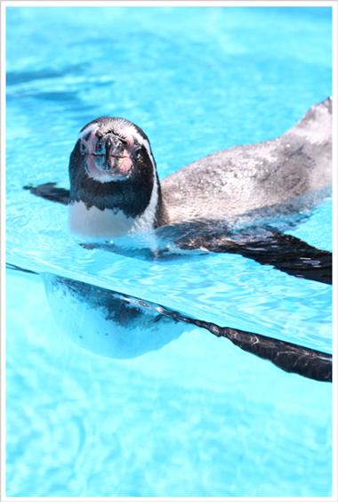 鳥羽水族館とお知らせ_c0112313_924253.jpg