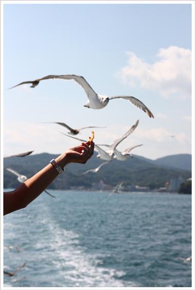 鳥羽水族館とお知らせ_c0112313_9354667.jpg