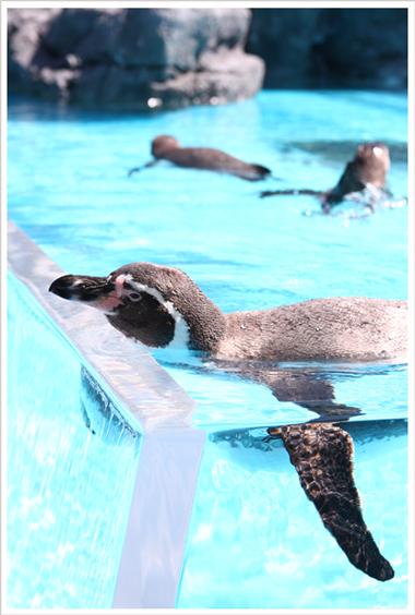 鳥羽水族館とお知らせ_c0112313_939212.jpg
