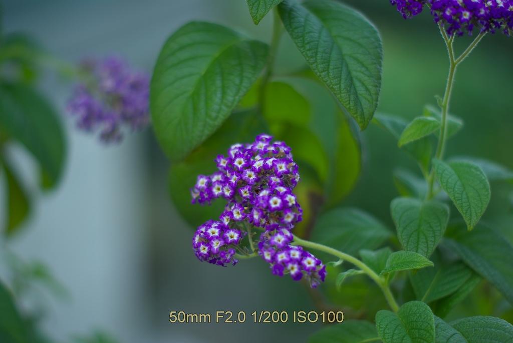 b0162135_1963385.jpg