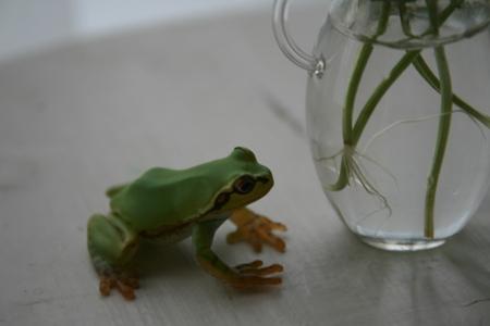 カエルは見た。_e0184445_9392051.jpg