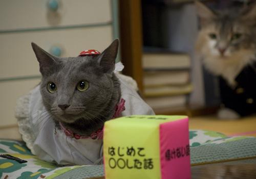 (有)猫田工務店 その2_d0126264_19523870.jpg