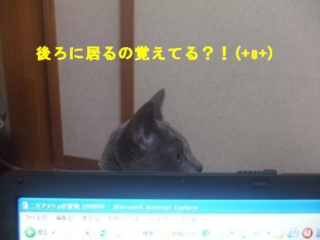 c0203287_16305327.jpg