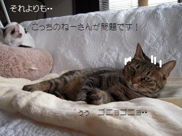 c0139488_16145548.jpg