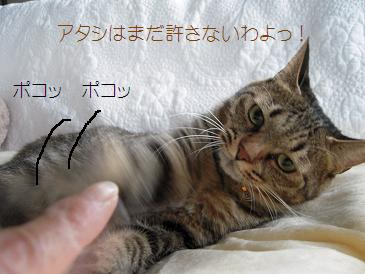 c0139488_16152046.jpg