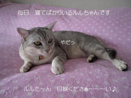 c0139488_1632377.jpg