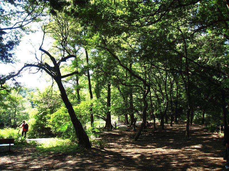 【散撮】秋晴れの公園_f0141609_2084640.jpg