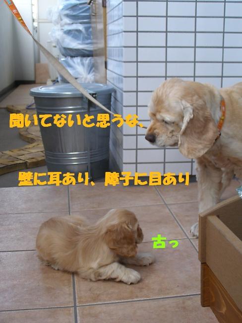b0067012_2311088.jpg
