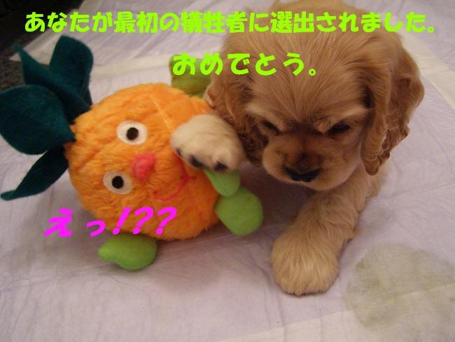 b0067012_965416.jpg