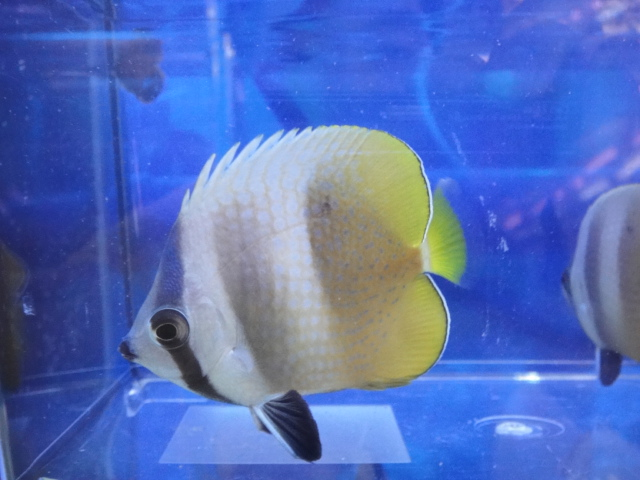 海水魚・サンゴ・水草・日本産淡水魚_f0189122_14295487.jpg