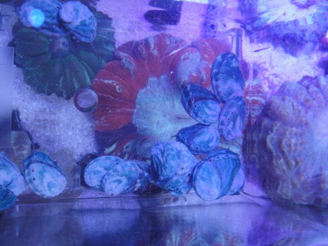 海水魚・サンゴ・水草・日本産淡水魚_f0189122_14323584.jpg