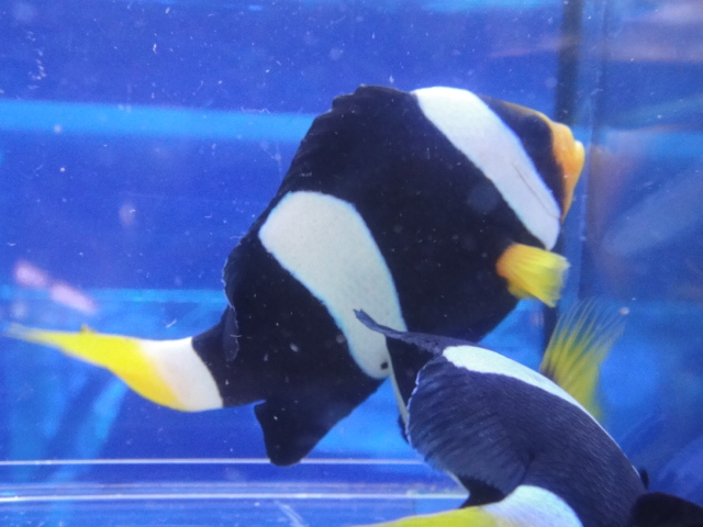 海水魚・サンゴ・水草・日本産淡水魚_f0189122_1457446.jpg