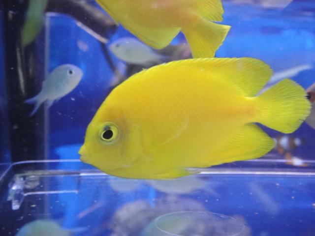 海水魚・サンゴ・水草・日本産淡水魚_f0189122_1772483.jpg