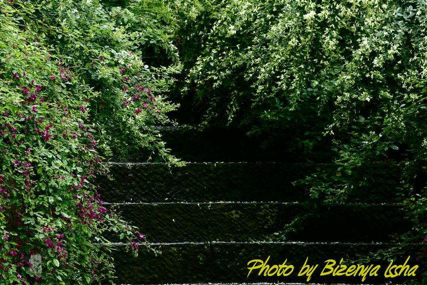 『海蔵寺』Flower_d0086248_6502835.jpg