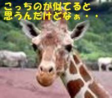 f0176156_13385097.jpg