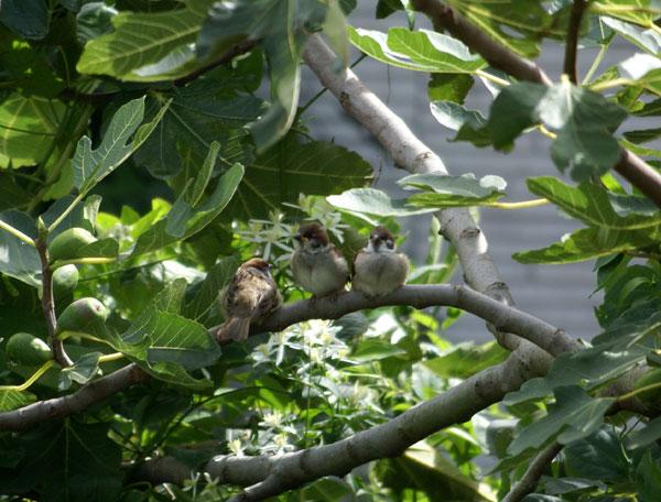 このごろの雀と、餌台の中身をちょこっと♪_a0136293_13472636.jpg