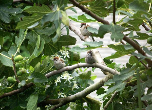 このごろの雀と、餌台の中身をちょこっと♪_a0136293_13512896.jpg