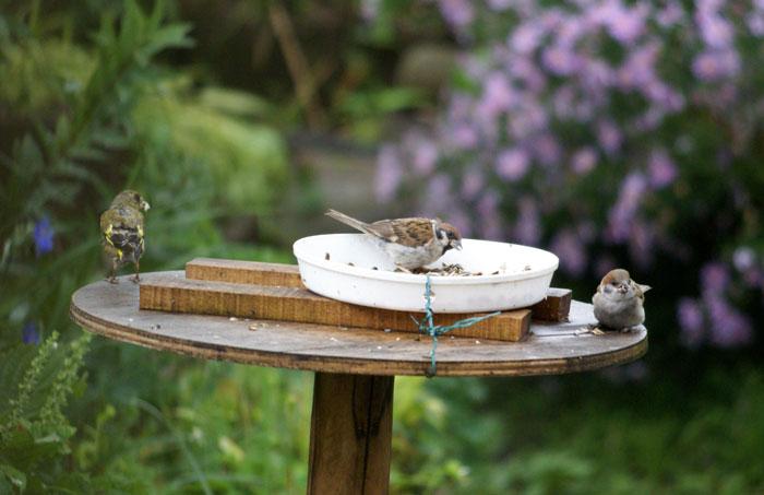 このごろの雀と、餌台の中身をちょこっと♪_a0136293_13515793.jpg