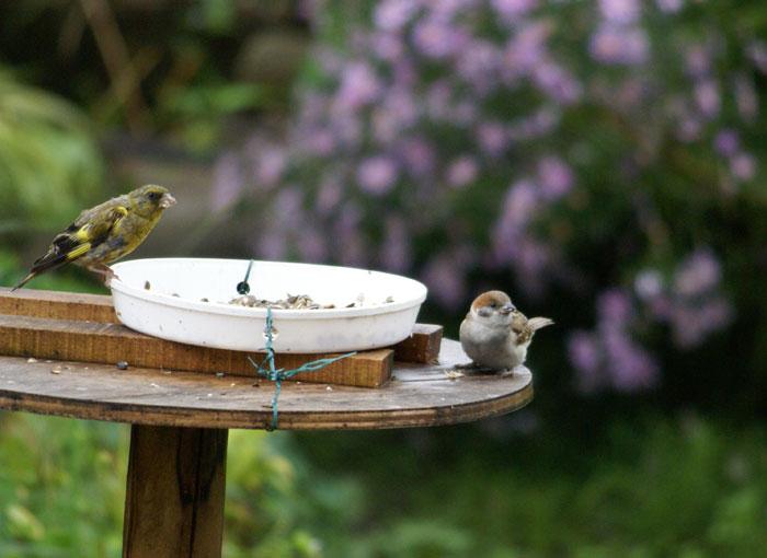 このごろの雀と、餌台の中身をちょこっと♪_a0136293_13521775.jpg