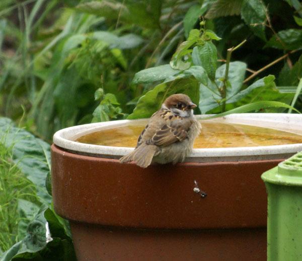 このごろの雀と、餌台の中身をちょこっと♪_a0136293_13524348.jpg