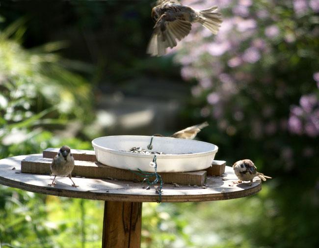 このごろの雀と、餌台の中身をちょこっと♪_a0136293_13534610.jpg