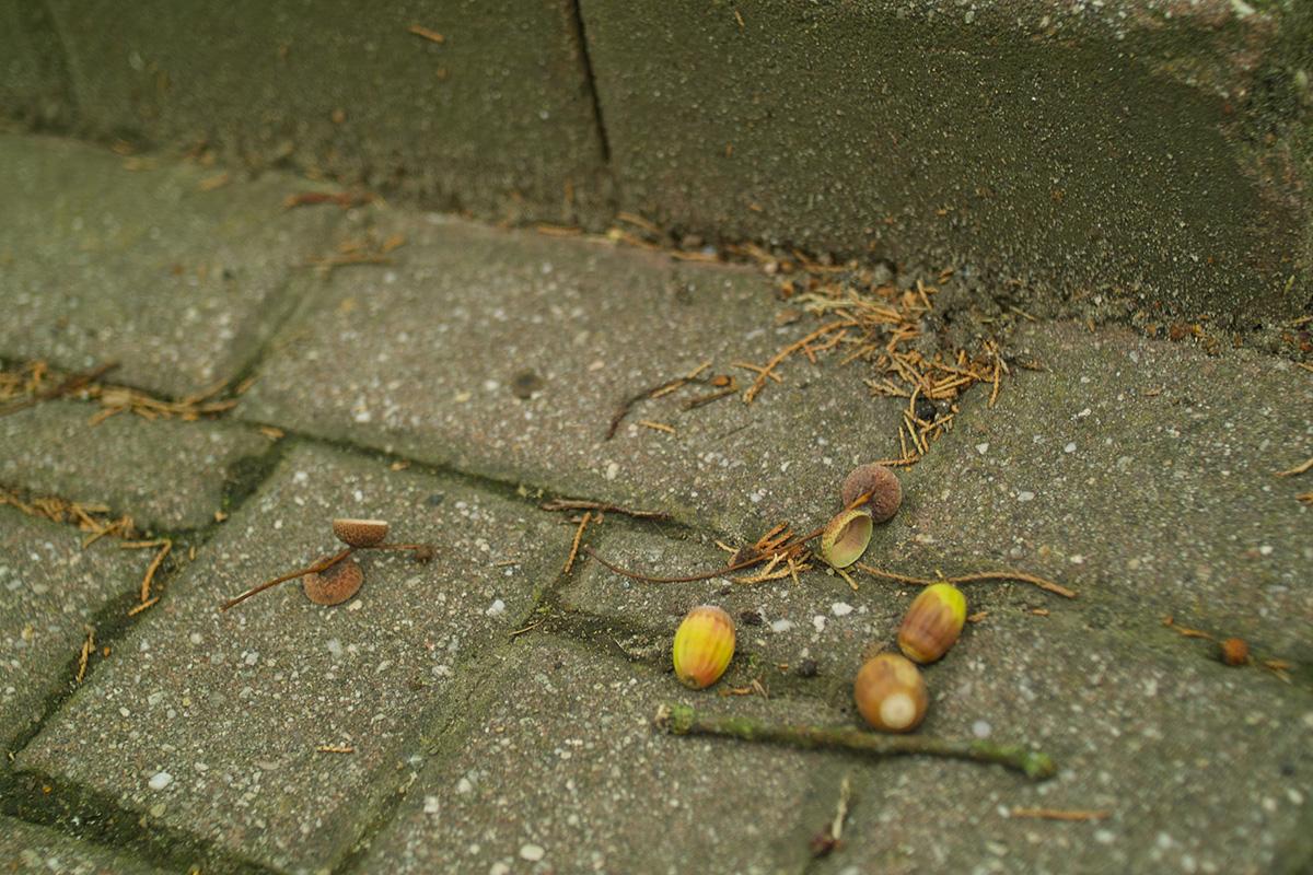 芽の出るみこみなき者たち_b0148617_1835237.jpg