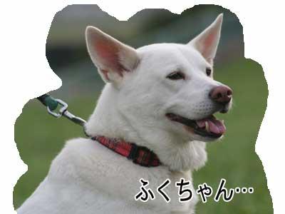 c0166018_14353875.jpg
