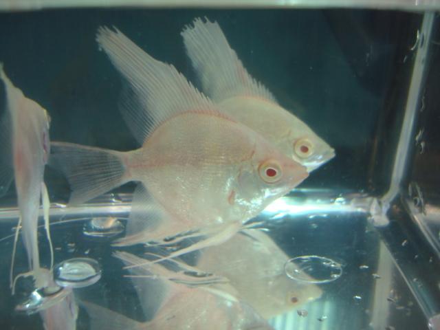 熱帯魚・金魚・水草_f0189122_15331964.jpg